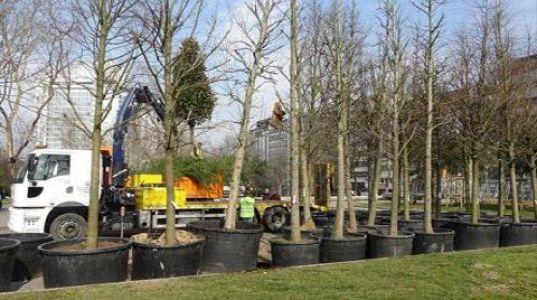 Gezi Parkı'na 150 Yeni Ağaç Dikiliyor