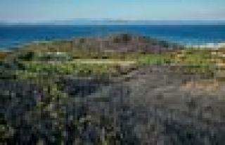 Ayvalık'taki Orman Yangını Kontrol Altına Alındı